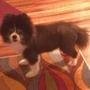 Sadie on all fours
