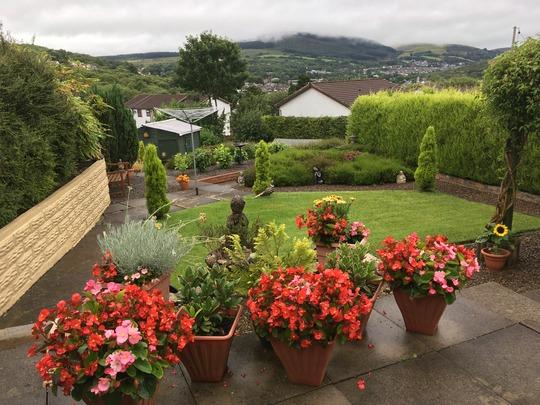 Another grey day in my garden