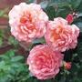 Rosa Compassion, climber