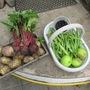 From the veg plot yesterday