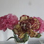 Carnations from the garden..