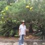 Giant Thevetia (Thevetia thevetiodes) and I at Quail Botanical Gardens (Thevetia thevetiodes)