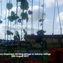 Morning Glory (Impomea) climbing strings on balcony railings 29th August 2017 (Ipomoea purpurea (Morning glory))
