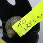i dont know where the snails come from irish