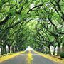 A_rua_mais_bonita_do_mundo