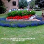 Flower_bed_with_boat_on_huntingdon_ring_road_19th_july_2017_001
