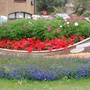 Flower bed with boat on Huntingdon Ring Road Close up 19th July 2017 002