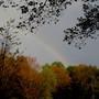 Rainbow and autumn leaves..