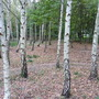Woodland - Beginning To Look Alot Like Autumn
