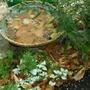 Nature's Birdbath
