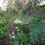 Top_border_replanted_2