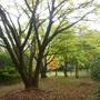 Autumnal walk through Highdown Gardens
