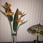 Strelitzia reginae - Bird-of-Paradise Flowers (Strelitzia reginae - Bird-of-Paradise)