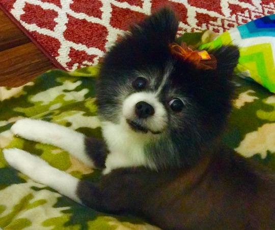 My Sadie