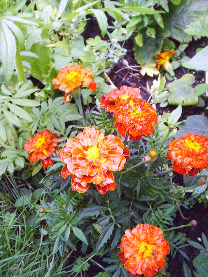 margold_orange.jpg