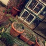 The decking pots..