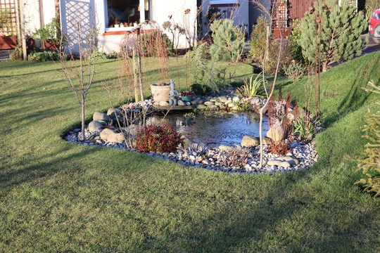 The Pond in February Sunshine