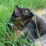 Beryl_loves_the_long_grass_but_i_don_t_