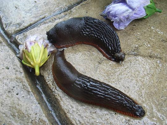 Slugs - 2