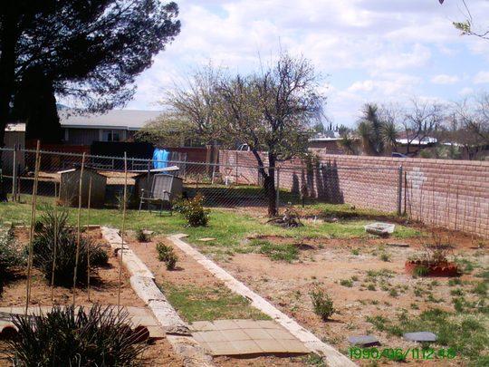 Northeast corner of Backyard