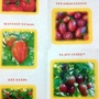 Tomato seeds 5 varieties from Sharon 21st March 2018 (Solanum lycopersicum (Tomato))