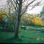 Our garden in 1998 - when the hard work began!