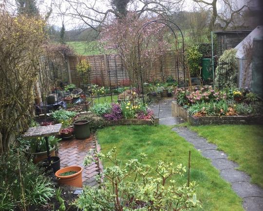 garden looking a bit tatty !
