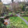 garden looking a bit tatty !