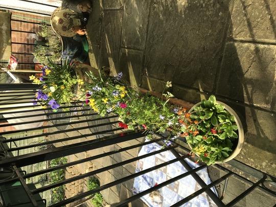 spring pots