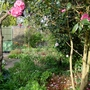 Spring_garden_and_wrath_border_26th_august