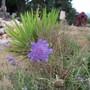 Purple_under_green