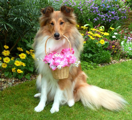 A flower basket for you  ...
