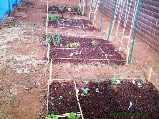 Square Foot Veggie Garden