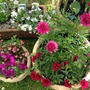 Bolder colours in my pots!