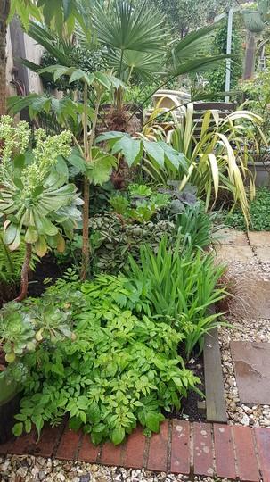 Succulents and bog plants.....