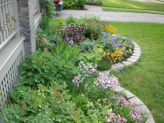 More of my front garden