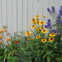 garden by back fence