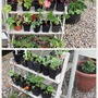 New plant stands