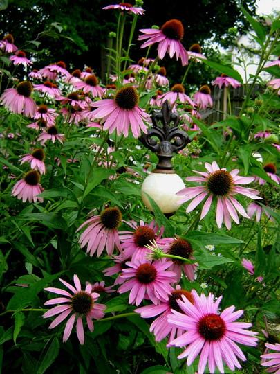 Echinacea and Fleur-de-lis finial