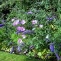 Buddleia and cosmos