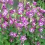 Mainly_garden_pics_007