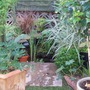 Mainly_garden_pics_010