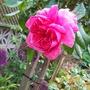 Mainly_garden_pics_013