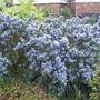 Mainly_garden_pics_039