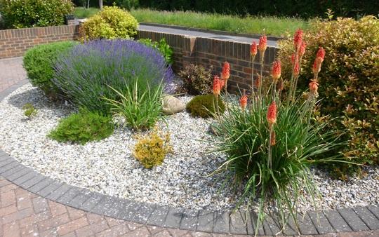 Front garden today