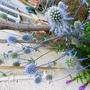 Blue Sea Holly (Eryngium)