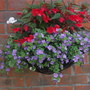 Hanging basket for my file (LHS)