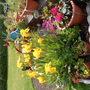 my beauitful garden