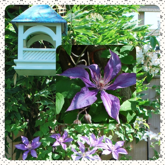 Bird feeder and Clematis