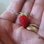 IMG 7315-First alpine strawberry